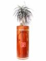*NEU* Design-Holzbehälter mit Feuerlöscherfach *NEU*